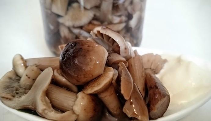 Маринованные грибы опята на зиму (простые и самые вкусные рецепты)